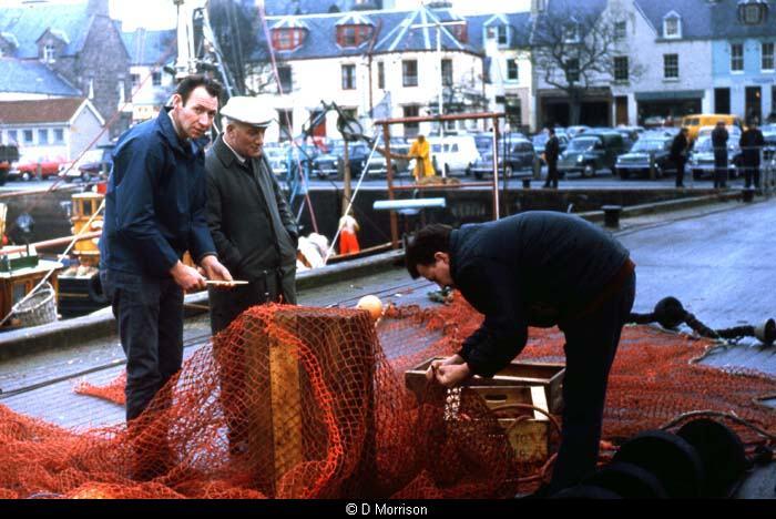 Herring on Stornoway Pier, 1960s
